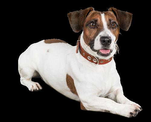 Rspca Rescue Dogs In Lincolnshire